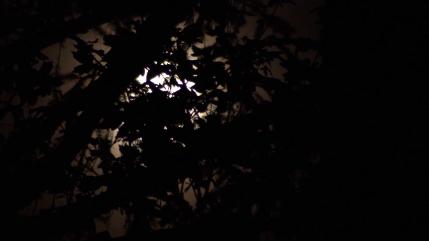 Time-lapse of a soft-focused moon as it moves along behind sharply focused foliage with a creepy horror movie feel to it. Dostupné videozáznamy