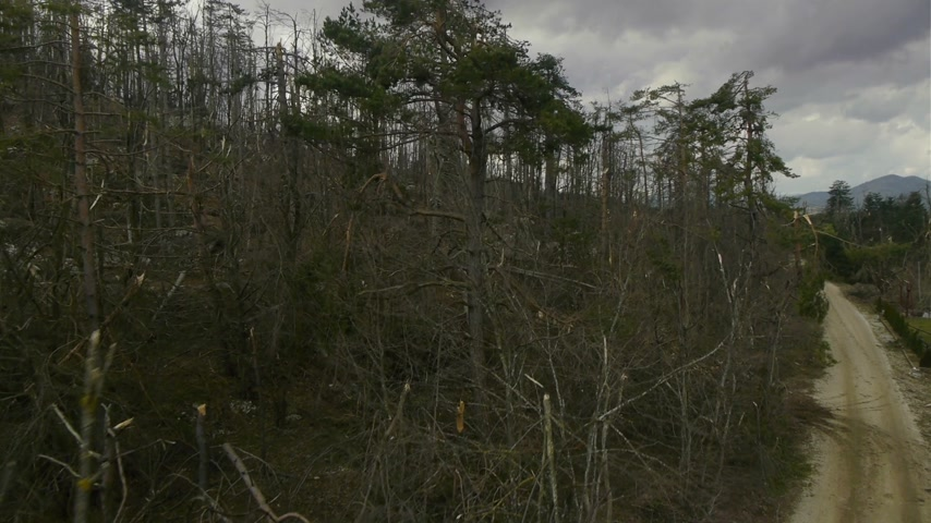невозделанный : Close, slow aerial lift over broken branches in demolished forest with dark clouds at background. Natural forest disaster.