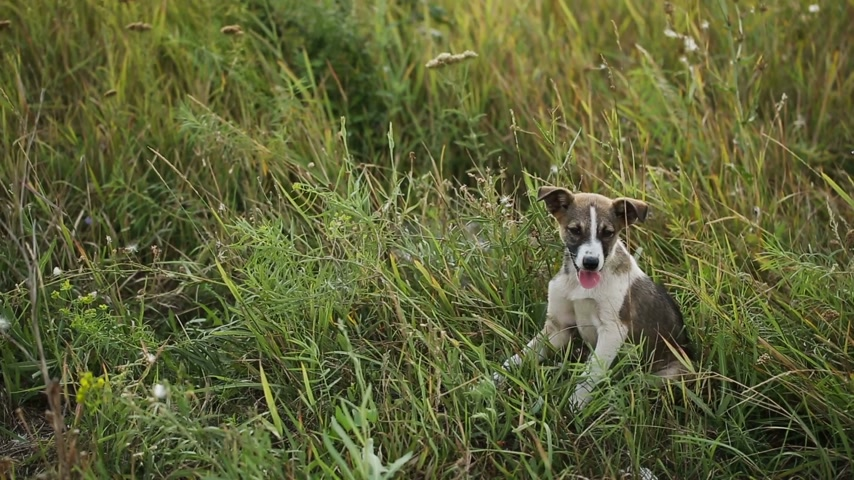 щенок : Puppy at the Grass 1