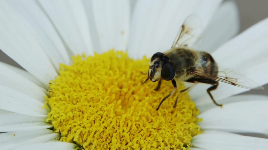 hoard : Bee Flew at Flower