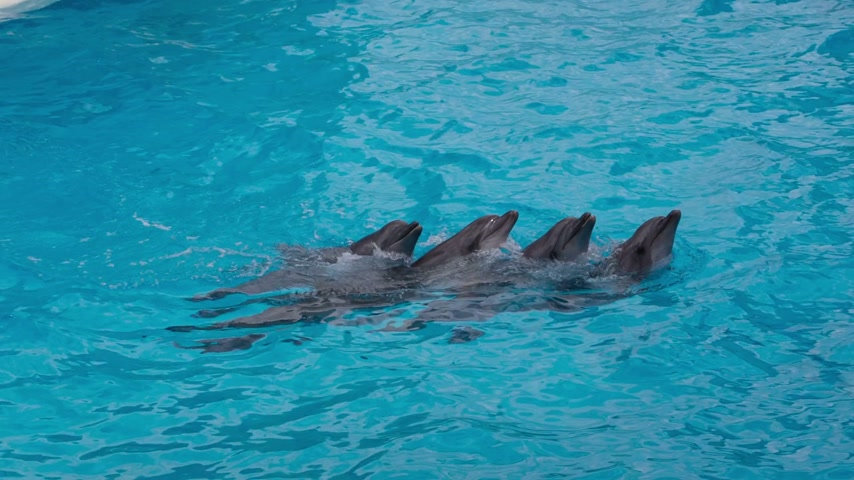 yunus : Dolphins Swim Each Other