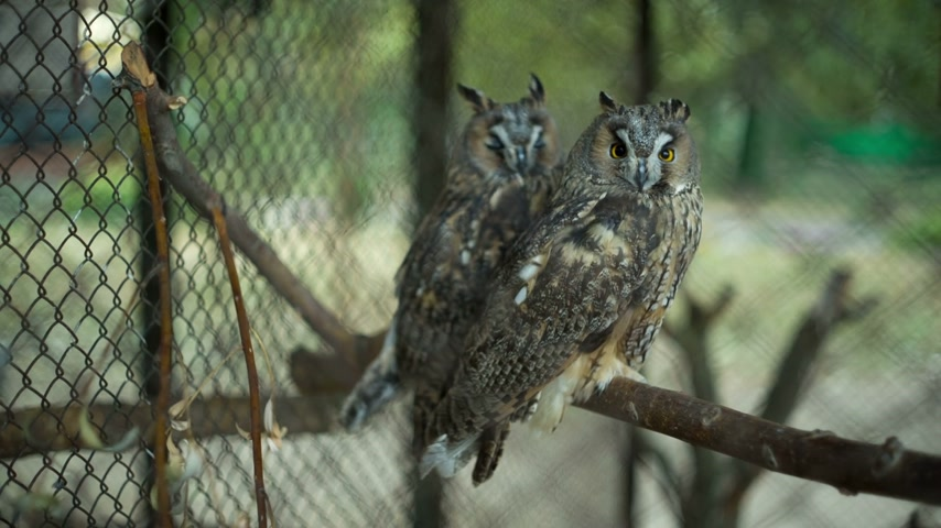 diurnal : Owls in the zoo
