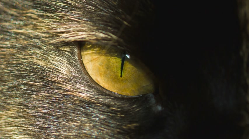 domestic animals : cats eye on sun