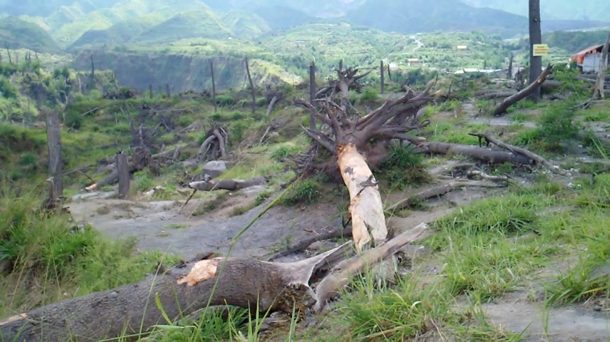 volkan : Trees were uprooted by the volcano eruption in a village on the slopes of Mount Merapi, Central Java, Indonesia.