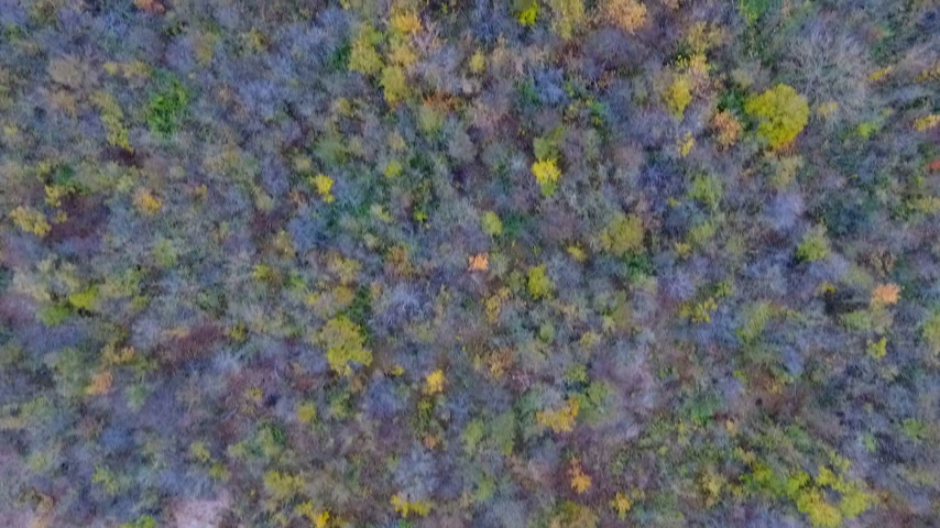 escarlate : Aerial flight over an autumn forest. Gold, yellow, scarlet autumn foliage. The crown of autumn trees. Untouched nature. Beautiful landscape. Dense forest.