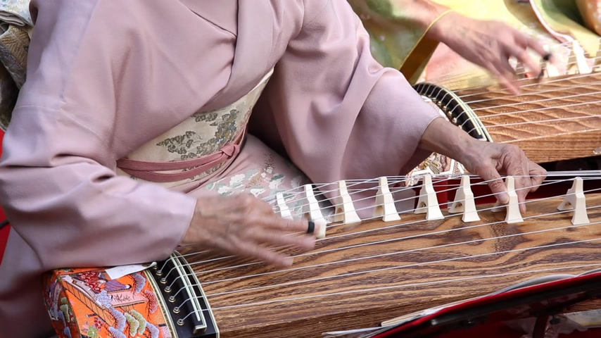 traditional ceremony : Japanese woman playing the traditional koto Japanese traditional instrument
