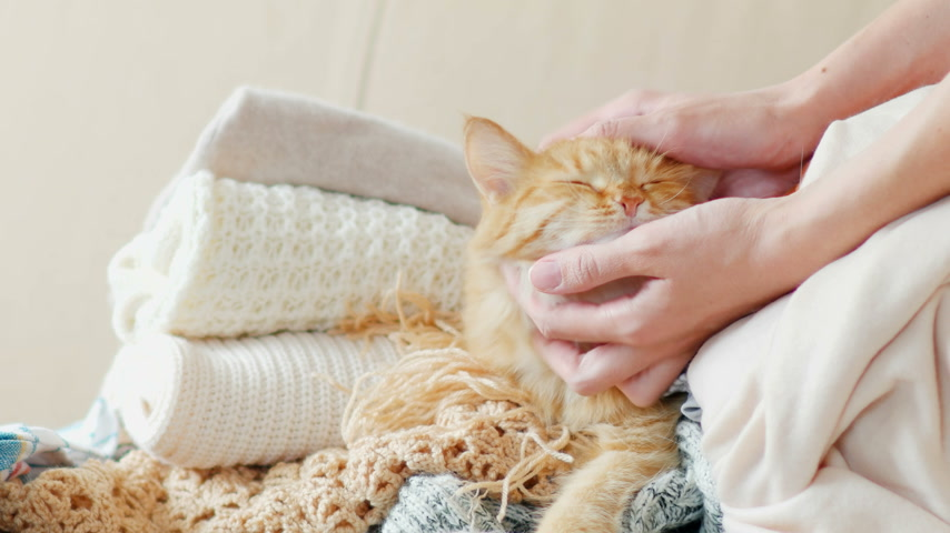 rakás : Cute ginger cat sleeps on a pile of knitted clothes. Warm knitted sweaters and scarfs are folded in heaps. Fluffy pet is dozing among cardigans. Man strokes his pet. Cozy home background