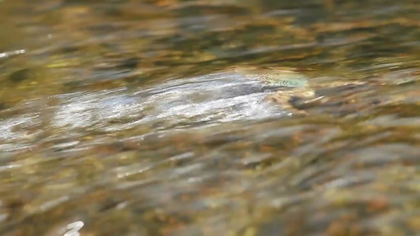 munch : Crab crawling on a rock near sea and searching for food. the Crab sending food into its mouth using claws. Phuket island, Thailand. Stock Footage