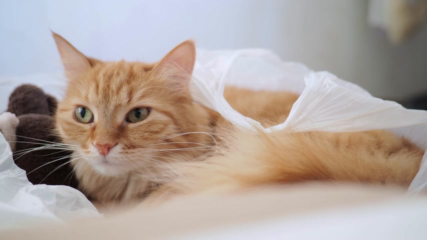 peluş : Cute ginger cat lying in plastic bag with plush toy bear. Fluffy pet is dozing. Cozy home background with kitty hiding in toys from noisy baby.