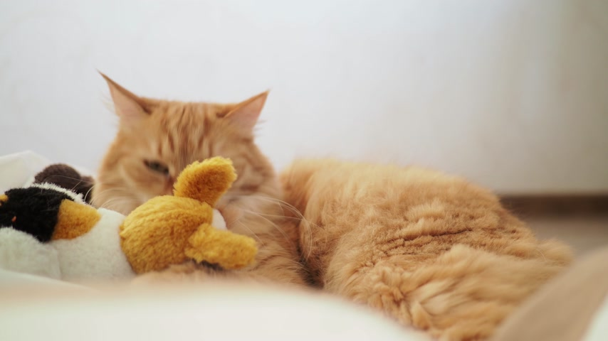 koťátko : Cute ginger cat lying in plastic bag with plush toy bear. Fluffy pet is dozing. Cozy home background with kitty hiding in toys from noisy baby.