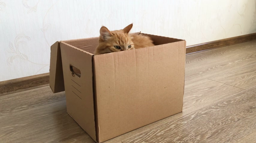 relocate : Cute ginger cat sitting inside a carton box. Fluffy pet is hiding. Stock Footage