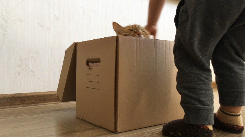 tehcir : Cute ginger cat sitting inside a carton box. Fluffy pet is hiding from little child.