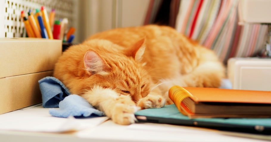 papírnictví : Cute ginger cat is sleeping among office supplies and sewing machine. Fluffy pet dozing on stationery. Cozy home background.