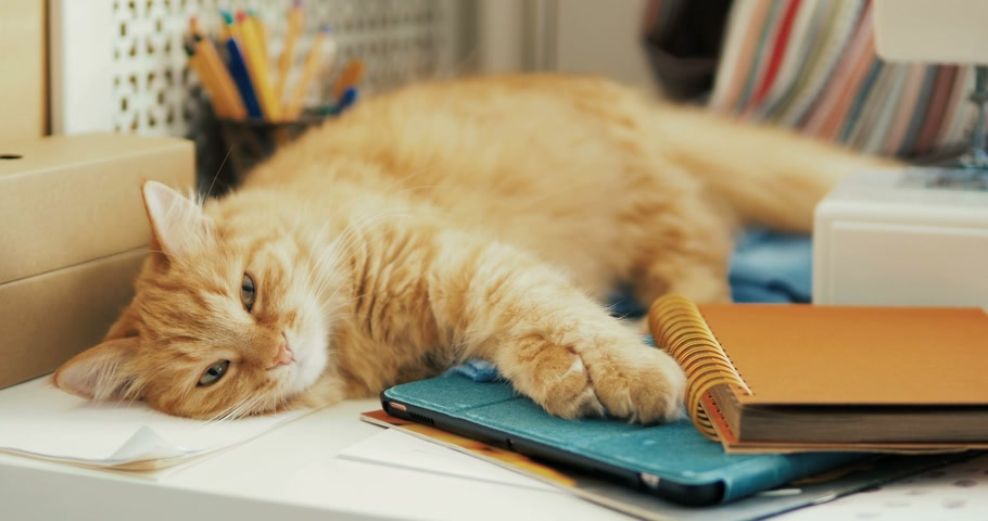papeteria : Cute ginger cat is sleeping among office supplies and sewing machine. Fluffy pet dozing on stationery. Cozy home background.