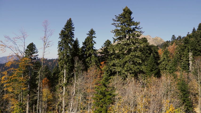krasnodar region : Panorama view on trees from moving cabins of the cable road. Funicular moving over trees on mountains slopes. Rosa Khutor, Russia.