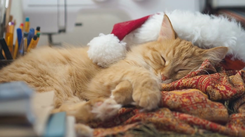 idílico : Cute ginger cat lying in Santa Claus red hat. Fluffy pet dozing on work table. Christmas and New Year holiday. Vídeos
