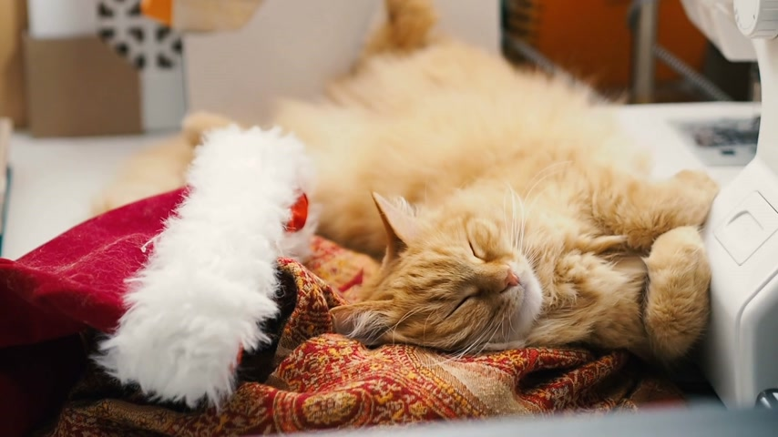 кошачий : Cute ginger cat lying belly up in Santa Claus red hat. Fluffy pet dozing on work table. Christmas and New Year holiday.