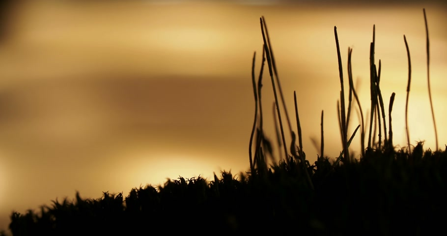 ložisko : Macro footage with moving ants on on sunset background.