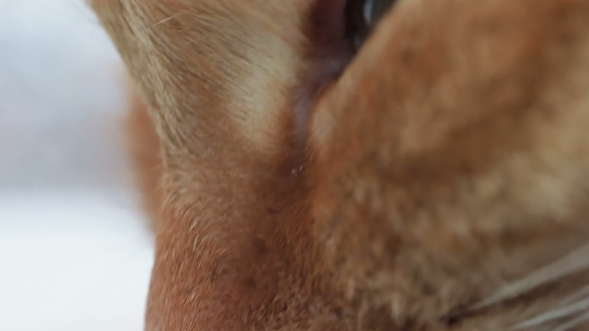 кошачий : Close up footage of blinking cat. Macro clip of fluffy pets eye. Стоковые видеозаписи