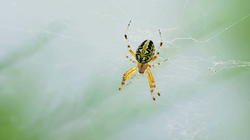 расфокусированный : Spider sitting on its web. Kemer, Turkey.