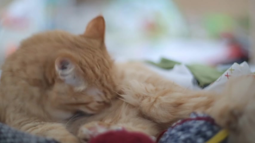 meada : Cat licking inside box with needlework - skeins of yarn, folded fabrics and threads.