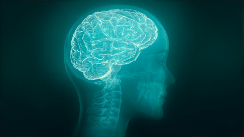 destaque : X-ray of human head showing skull, spine, brain, veins and nervous system. Brain featured. Loop.