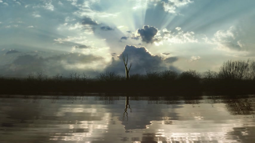 kreatywność : Timelapse of a growing tree reflecting in a lake. Sunset clouds with god-rays in the back.