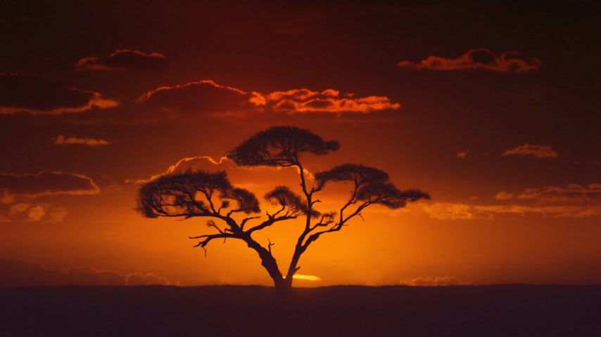 afrika : African sunrise timelapse. Acacia tree in the foreground.