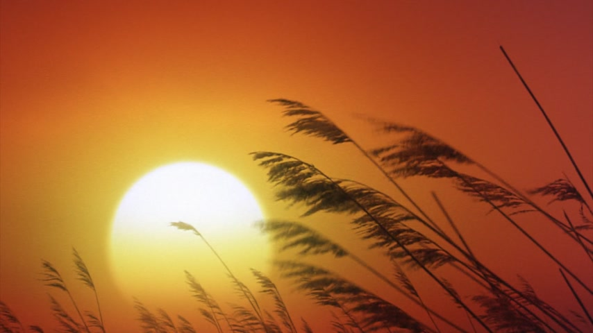 optimistický : Big yellow sun with grasses in the foreground.