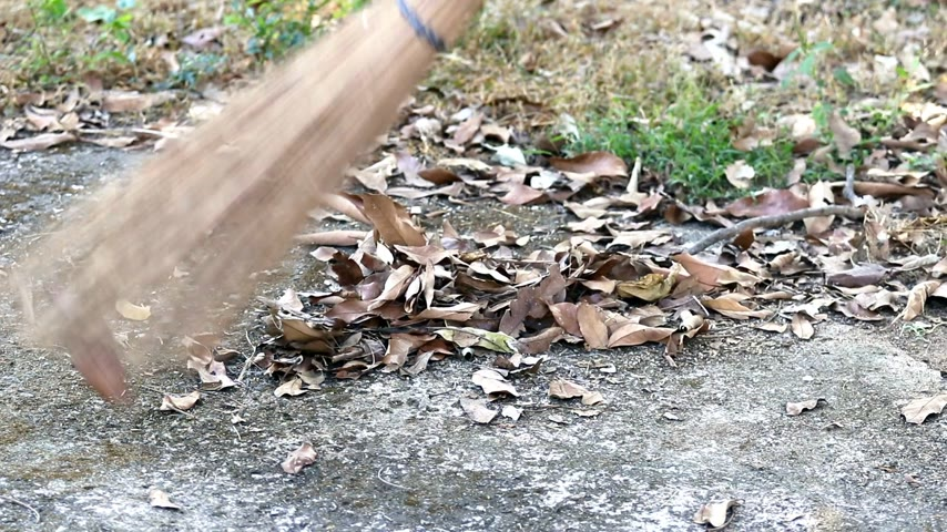 dragging : Sweeping dry leaves with coconut-palm leaf stalk broom on concrete floor