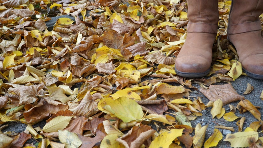 bota : Woman standing on autumn fall ground and leaves. Female legs in brown shoes boots. 4K steadicam shot ProRes HQ codec.