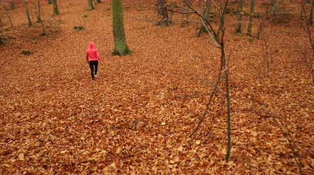 a healthy lifestyle : Woman warming up in autumn fall park forest. Young girl with smartphone armband activity tracker. Fitness technology. 4K steadicam shot ProRes HQ codec.