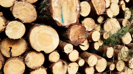 legna da ardere : Pile of wood wooden logs in forest 4K