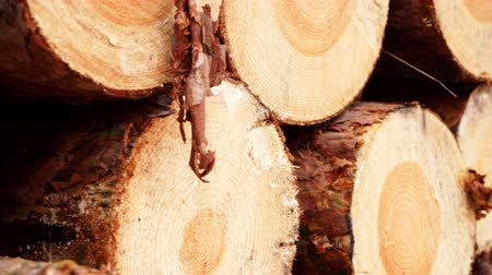 silvicultura : Pile of wood wooden logs as background 4K Stock Footage