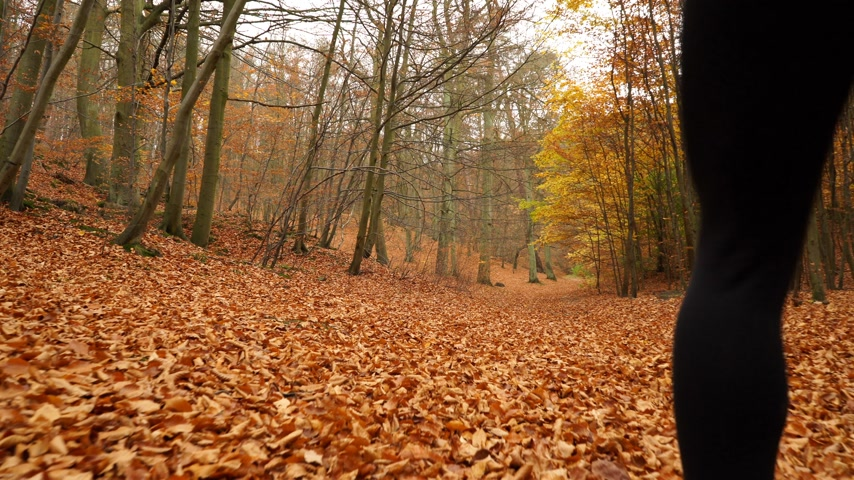 blood sport : Woman running jogging in autumn park fall forest with smartphone app. Young girl with activity tracker armband. Fitness technology. 4K steadicam shot ProRes HQ codec.