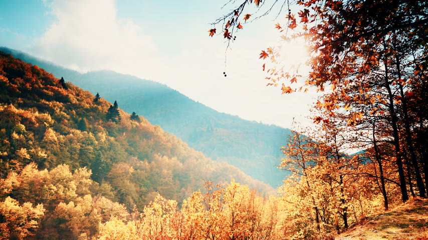 natural tranquil : Autumnal trees forest mountains landscape
