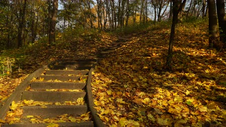 lépések : Stairs stairway in autumn fall park forest. O4K steadicam shot ProRes HQ codec.