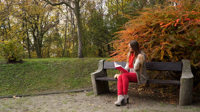 irodalom : Woman fashion girl relaxing in autumnal park reading book sitting on bench. Fall lifestyle concept. 4K ProRes HQ codec Stock mozgókép