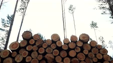 recursos : Pile of wood wooden logs in forest 4K