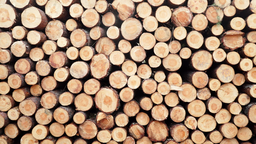 杭 : Pile of wood wooden logs as background 4K 動画素材