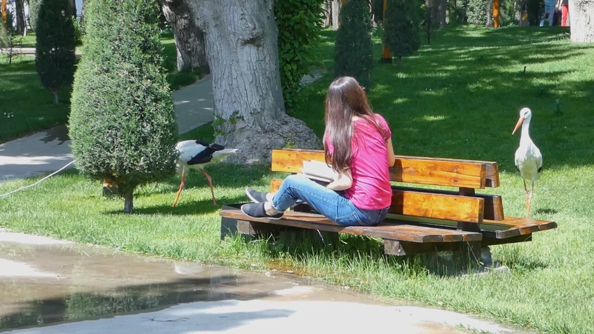 bird learning : girl reading a book in a picturesque Park on the background of a living storks, Sunny day. the girl of the Asian appearance Stock Footage