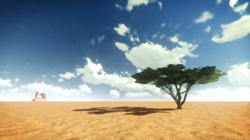 környezeti : Desert Tree and Birds with Time Lapse Clouds Stock mozgókép
