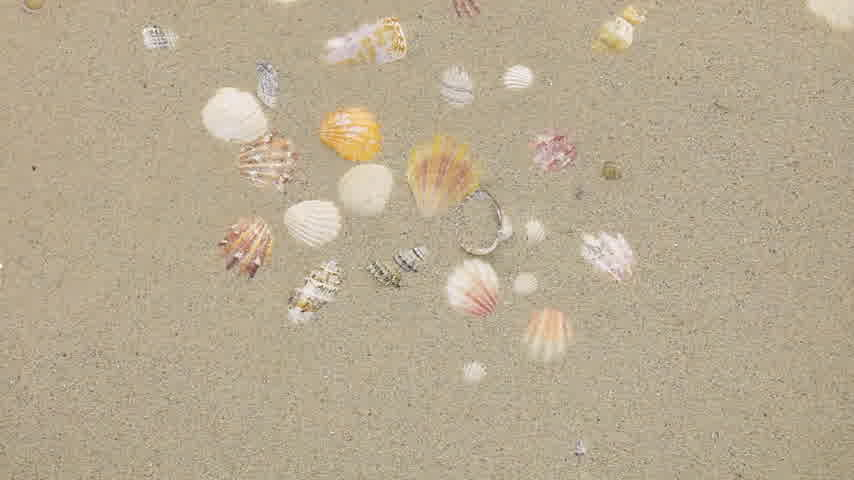 tesouro : Wind blowing on the sand and opening seashells, top view