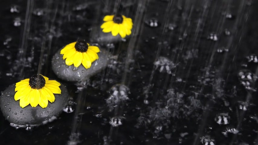 pétalas : Three black stones with flowers in the rain, drops, bubbles, wind,