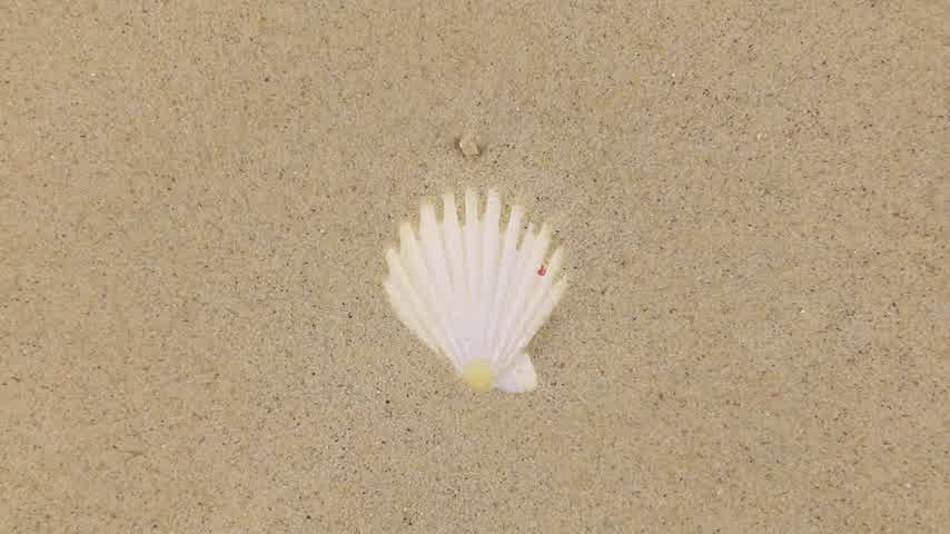 areias : Wind blowing on the sand and opening white seashells, top view