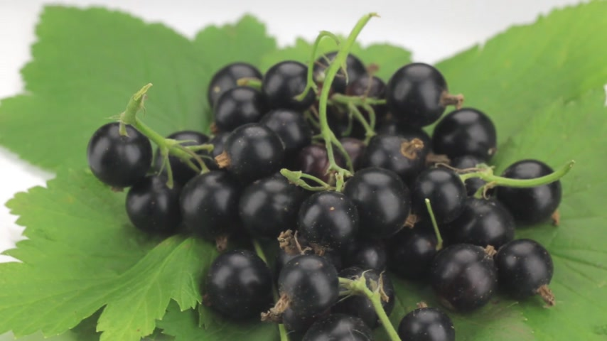 смородина : Pile of fresh, ripe, juicy berries black currant whirl. Стоковые видеозаписи