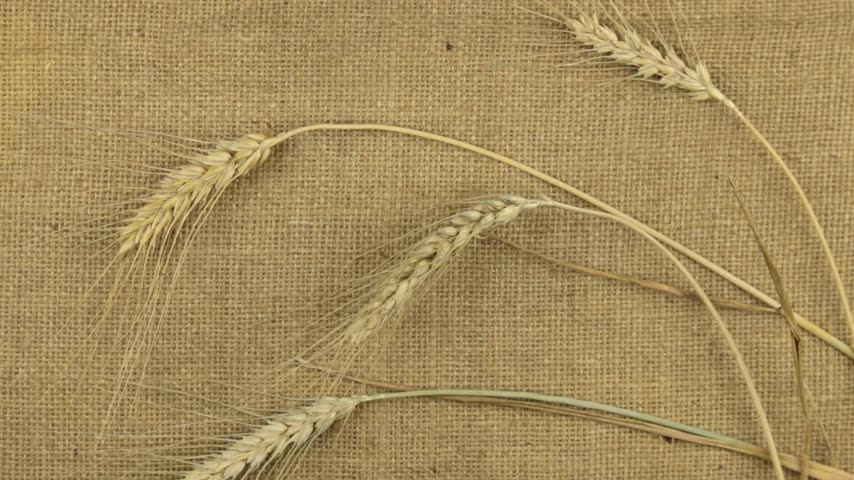 bez : Approximation, zoom of wheat ears lying on sackcloth