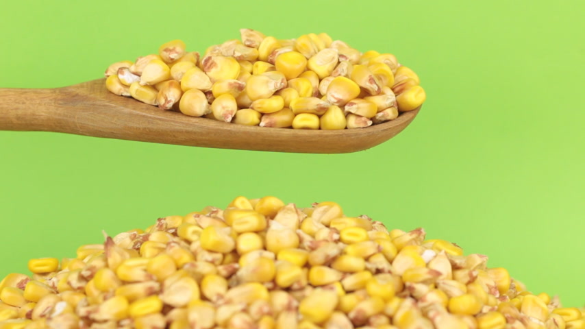 peeled grains : Wooden spoon pours grains corn at heap of corn on a green screen
