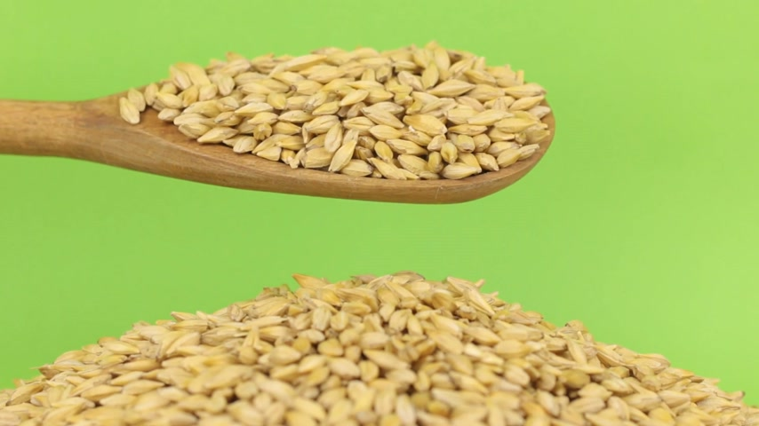 peeled grains : Wooden spoon pours grains barley at heap of barley on a green screen