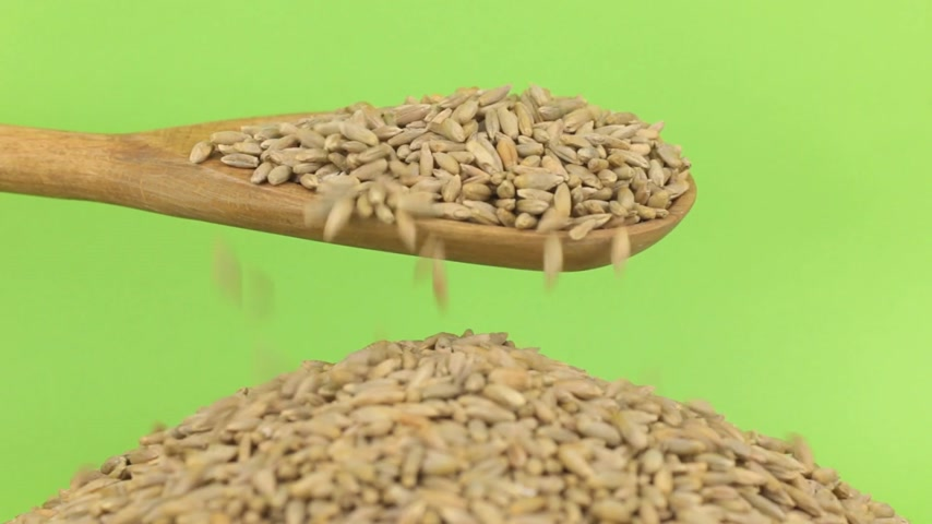 peeled grains : Wooden spoon pours grains rye at heap of rye on a green screen